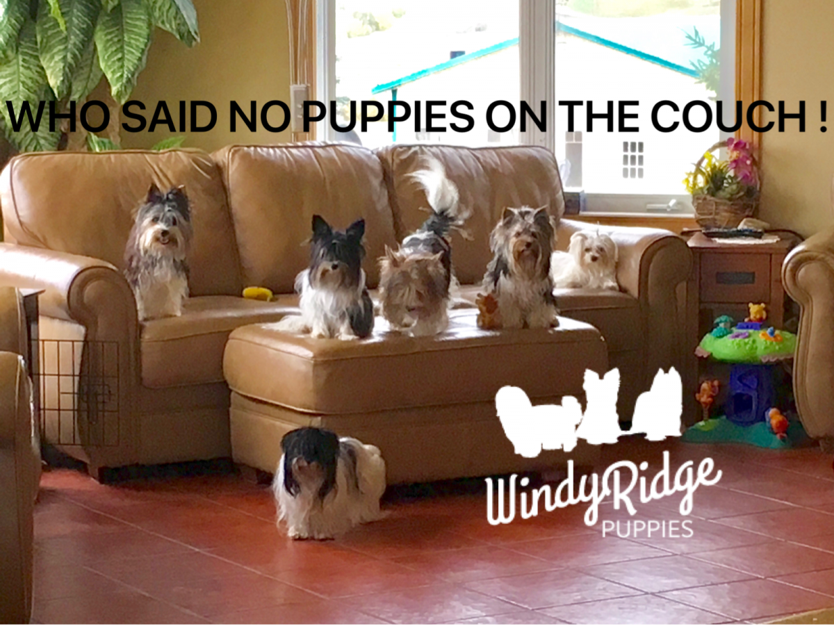 Home - Windy Ridge Puppies